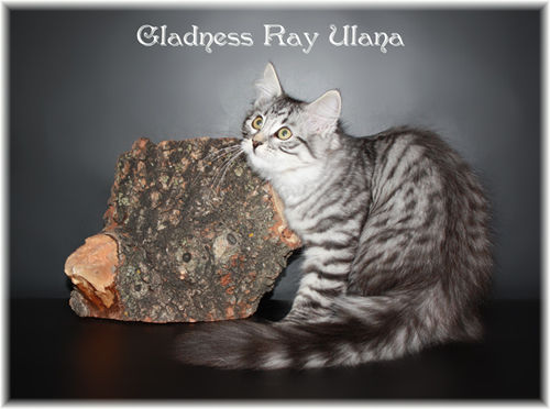 Gladness Ray Ulana